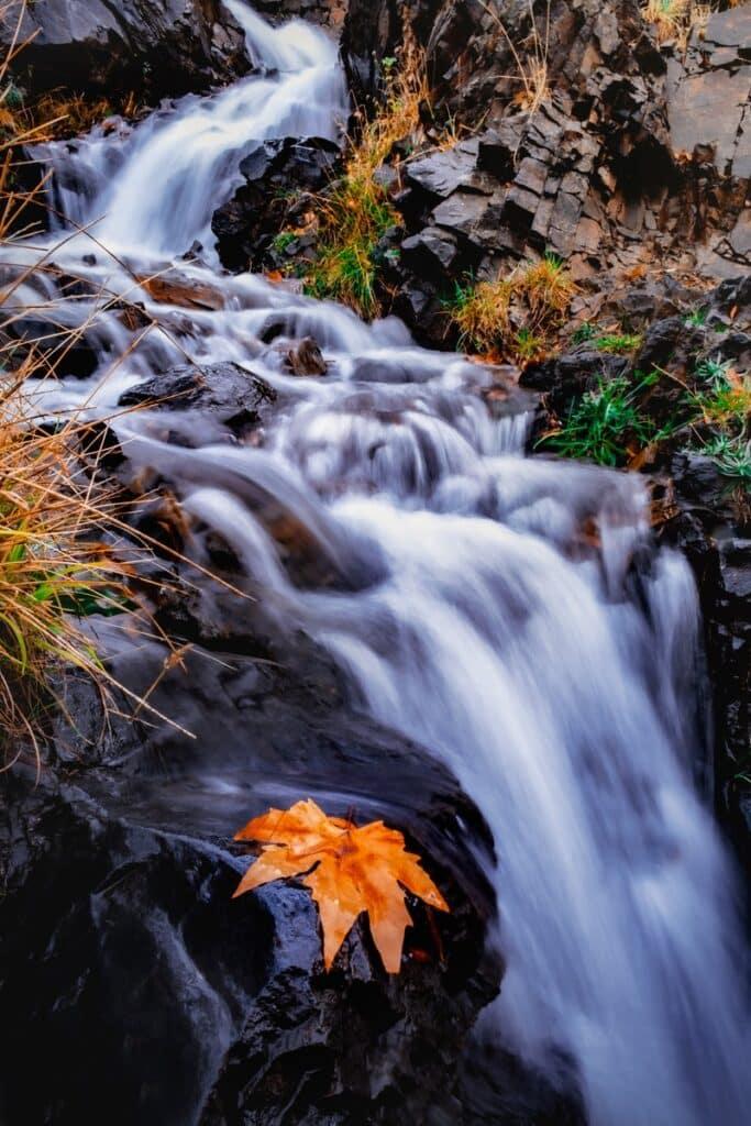méditation pensées feuille rivière